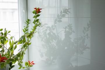 Fototapeta Odbicie rośliny w płytkach łazienki obraz