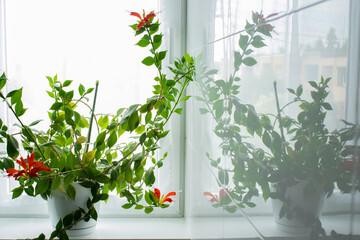Odbicie rośliny w płytkach łazienki