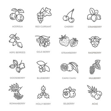Outline icons set in thin modern design style, flat line stroke vector symbols - berry collection