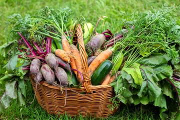 Koszyk pełen świeżych warzyw. Ekologiczne warzywa uprawiane w przydomowym ogródku