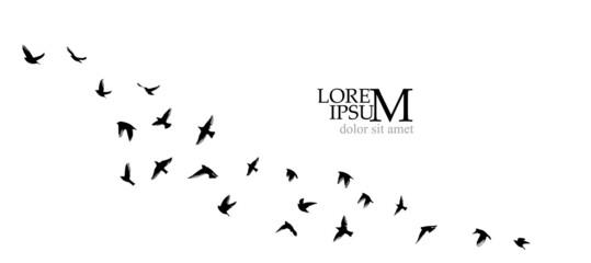 Fototapeta A flock of flying birds. Vector illustration obraz