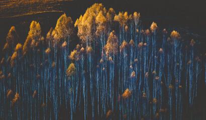 herfst achtergrond kleurrijke bomen in landschap