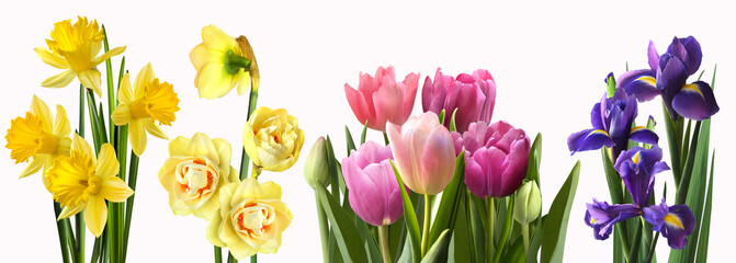 Different flowers isolated on a white background