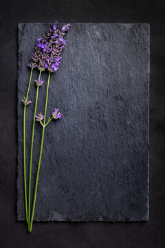 Top view of a black slate board with a bunch of lavender flowers on a dark background. Romantic theme with copyspace for your text.