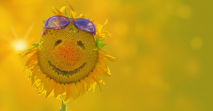 Smile on sunflower with sunglasses isolated on summer background as concept of healthy lifestyle for positive banner, poster, label, greeting card, invitation, sticker, etc.