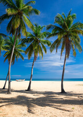 Fototapeta tropical beach in Sri Lanka . Summer holiday and vacation concept for tourism. obraz