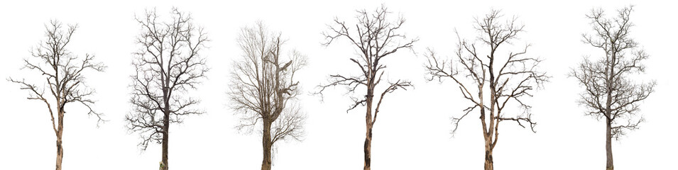 dead trees or dry tree collection isolated on white background.