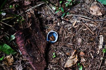 Fototapeta Zakrętka na ściółce leśnej obraz