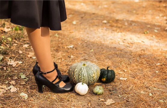 Cropped photo of female feet in retro leather black shoes with bows, standing on drowning path of dry leaves and grass next to multi-colored pumpkins