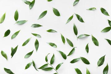 Fototapeta Green tea leaves on light background obraz