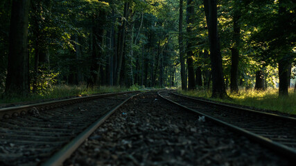 Diminishing view of railroad tracks running through the forest