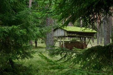 Fototapeta Jesienią w lesie, leśniczy przygotowują karmę dla dzikich zwierząt. Paśniki wypełnione są świeżym sianem. obraz