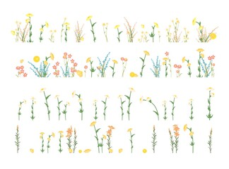 Set isolated. Meadow with wildflowers. Grass close-up. Wild green rural plants. Cartoon style. Flat design. Countryside view. Flowers. Vector illustration. art