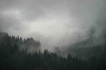 Bos Natuur Muur Behang Bergen Mist Landschap