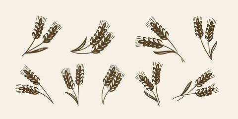 Ears of wheat, barley or rye icon. Bread, bakery symbol