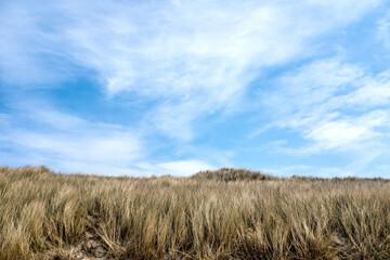Dunes at the beach of Wijk aan Zee, Noord-Holland Province, The Netherlands