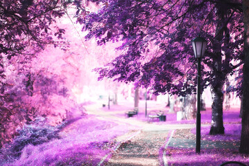 pink nature landscape, spring background flowers park outdoors