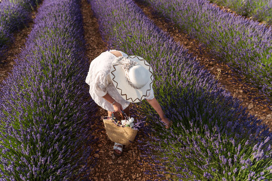 Overhead shot of an unrecognizable woman picking lavender flowers