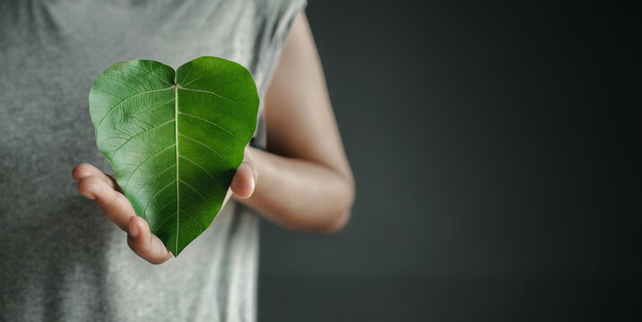 Green Energy, Renewable and Sustainable Resources. Environmental and Ecology Care Concept. Close up of Hand Holding a Heart Shape Green Leaf on Chest