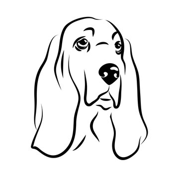 vector contour basset hound head, logo purebred pet, white black dog portrait, companion and animal friendship, realistic simple face