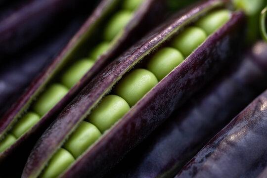sweet purple Magnolia suagarsnap eat all pea