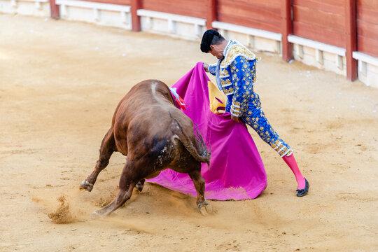 Brave bullfighter and bull of sandy arena