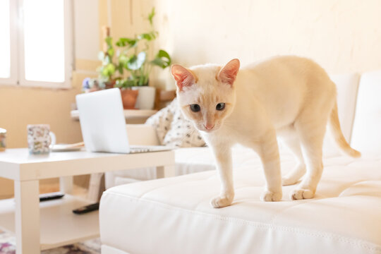 Cute cat standing on sofa at home