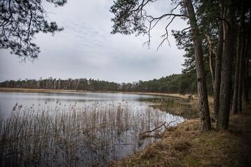 Fototapeta Piękny las nad jeziorem cudowny krajobraz w odbijającej się wodzie. obraz