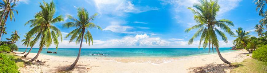 Obraz panorama of tropical beach with coconut palm trees - fototapety do salonu