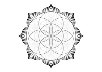Obraz Seed Flower of life lotus icon, yantra mandala sacred geometry, tattoo symbol of harmony and balance. Mystical talisman, black lines vector isolated on white background  - fototapety do salonu