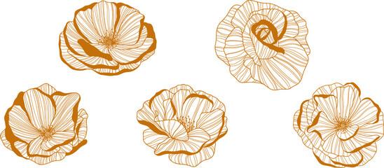 Obraz Rose flowers isolated on white. Hand drawn line vector illustration. Eps 10  - fototapety do salonu