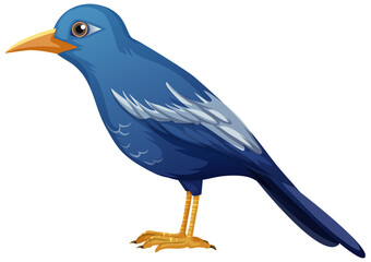 Blue bird animal on white background