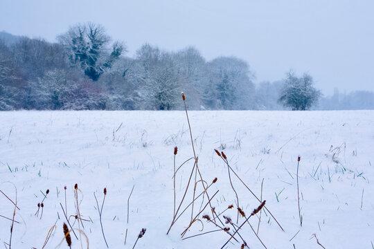 france; île de france; vallée de chevreuse : champs sous la neige