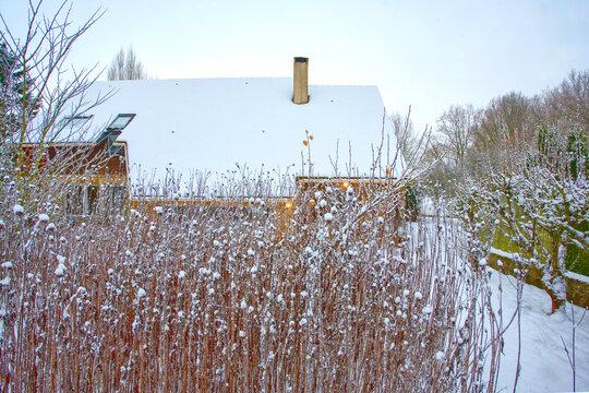 france,île de france,vallée de chevreuse : maison sous la neige et marguerites fanées