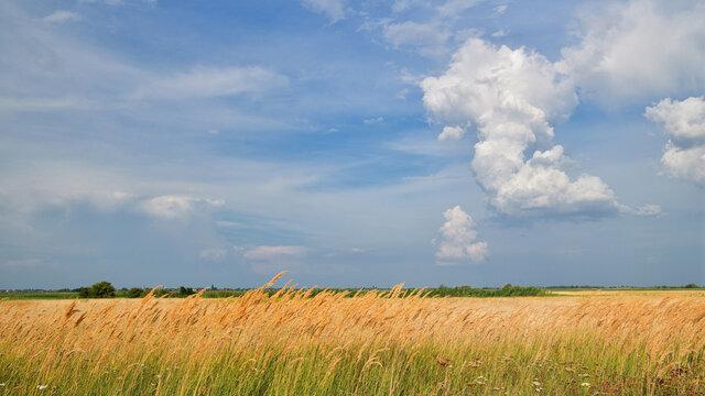 Getreidefeld im Burgenland