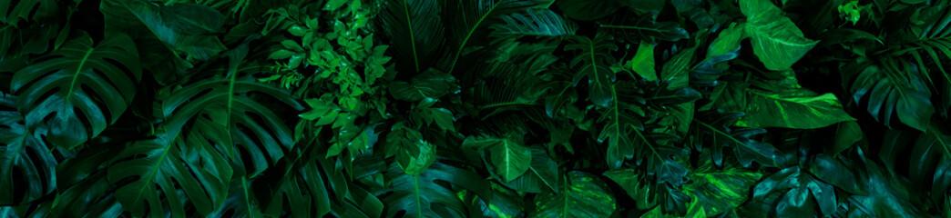 Group background of dark green tropical leaves ( monstera, palm, coconut leaf, fern, palm leaf,bananaleaf) Panorama background. concept of natur