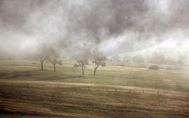 Polana drzewa we mgle panorama