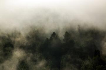 Krajobraz leśny wierzchołki drzew las we mgle panorama