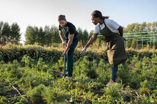 Diverse gardeners transplanting plants on farm