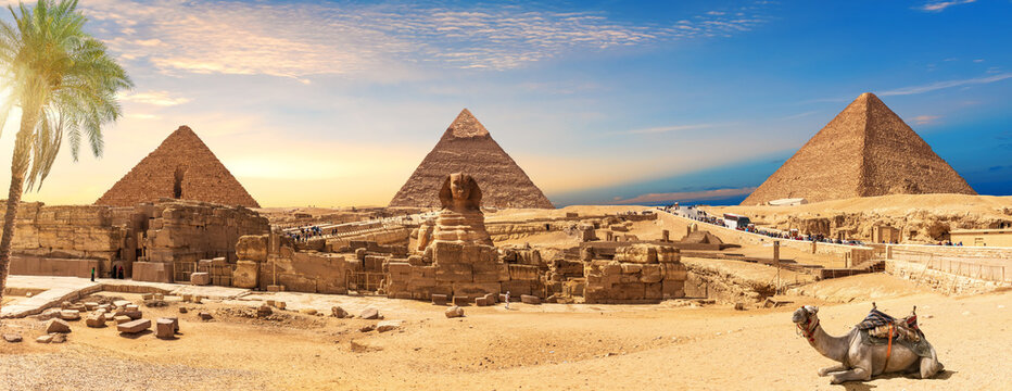 Egypt Pyramids and Sphinx panorama behind the palm with a camel lying by, Cairo, Giza