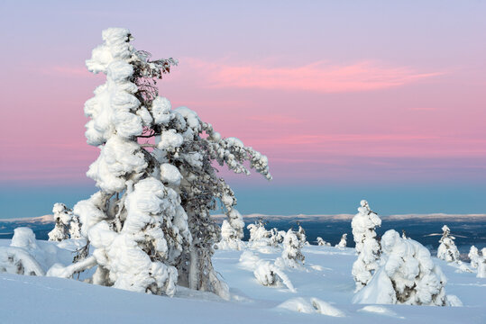 Polar forest under sunset