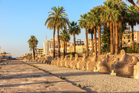 Sphinx Alley by the Luxor Temple main entrance, Egypt