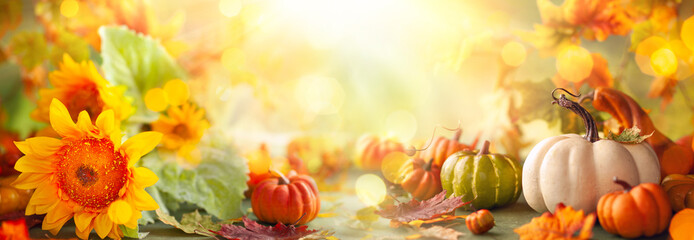 Obraz Festive autumn decor from pumpkins, flowers and fall leaves. Concept of Thanksgiving day or Halloween - fototapety do salonu