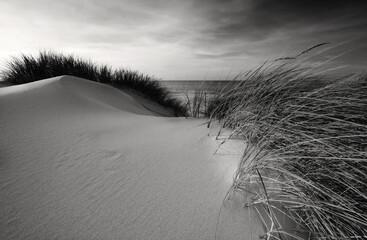 Wydmy na wybrzeżu Morza Bałtyckiego, Kołobrzeg, Polska.