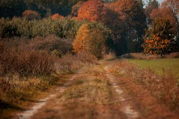 Fototapeta jesień na wsi, polska wieś obraz