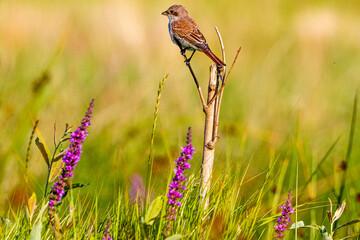 Obraz ptaszek na gałęzi - fototapety do salonu