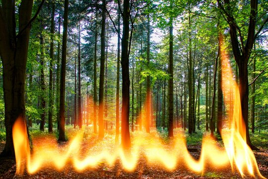 Wildfire, conceptual image