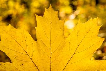 jesienny las i jesienne 偶贸艂te li艣cie