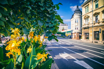 Fototapeta Ukwiecone centrum miasta obraz