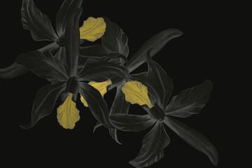 Fototapeta Kwiaty, Storczyki w kolorze grafitowym i żółcieni na czarnym tle. Grafika na ścianę , nadruk na tkaninę , tapetę. Elegancka stylistyka, wąska gama kolorystyczna. obraz
